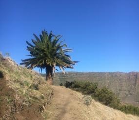 Wandern auf dem Camino Natural (GR132) auf La Gomera